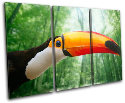 Toucan Bird Animals - 13-1828(00B)-TR32-LO